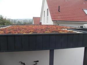 Extensiven Dachbegrünung nach Anwuchs